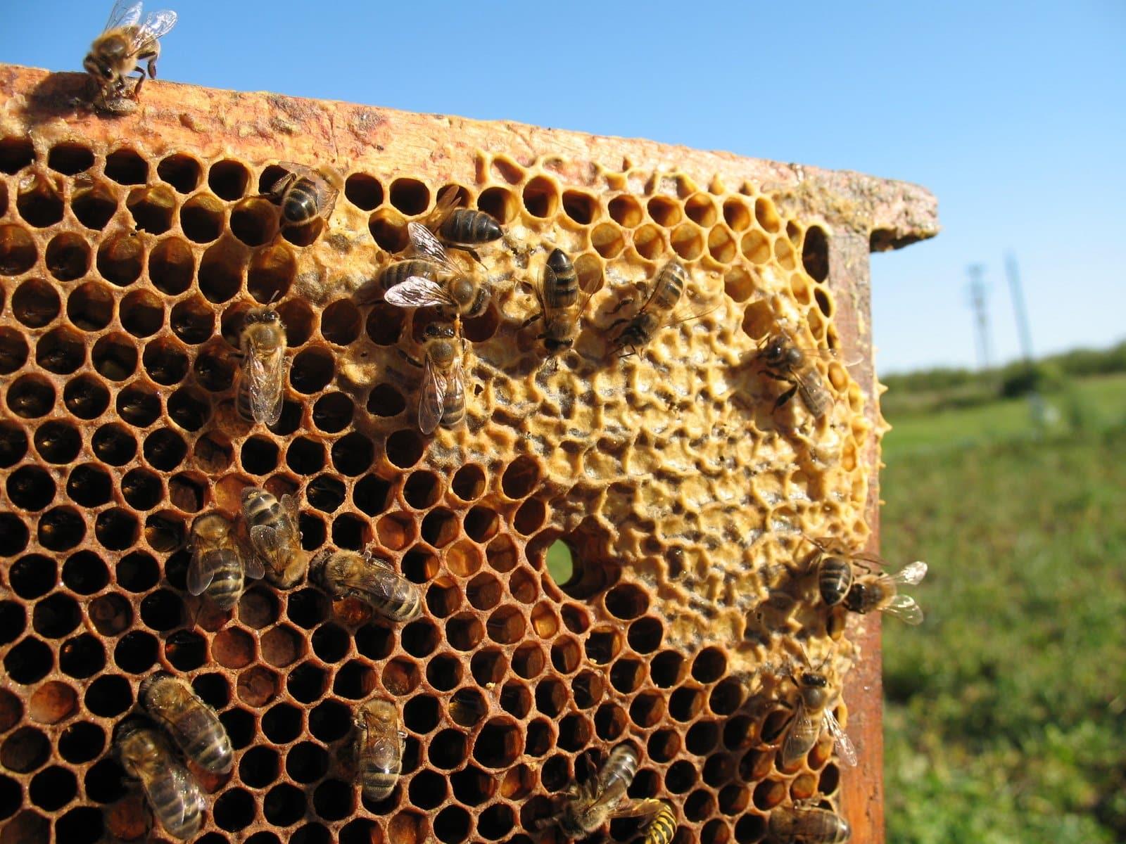 Ioway Bee Hives